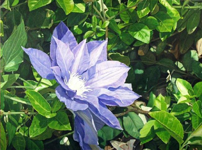 Art: Clematis by Artist Harlan