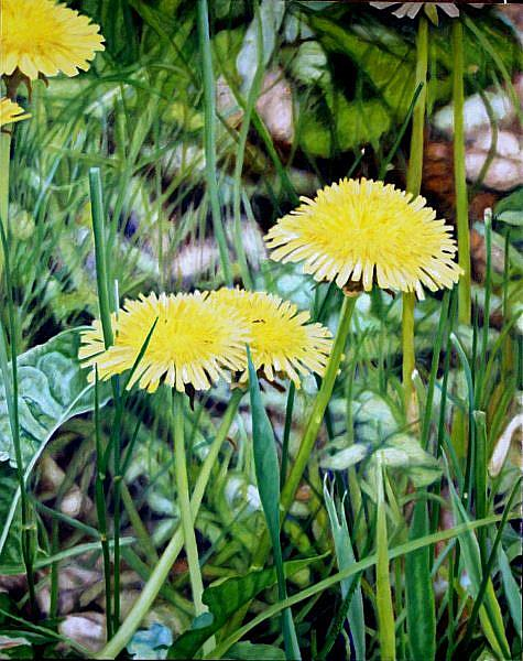 Art: Dandelions - Oil Painting by Artist Harlan