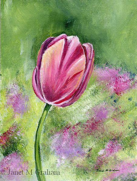 Art: Pink Tullip by Artist Janet M Graham
