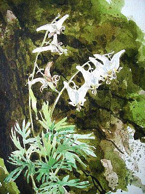 Art: Dutchman's Breeches by Artist Cathy  (Kate) Johnson