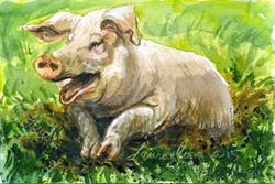 Art: Pig (Sold) by Artist Laura Ross
