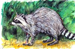 Art: Raccoon  (SOLD) by Artist Laura Ross