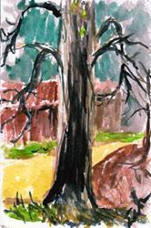 Art: Tree  (SOLD) by Artist Laura Ross