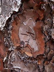 Art: Pine Bark Abstract by Artist Deanne Flouton