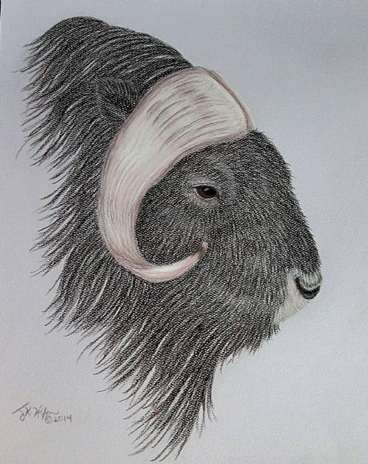 Art: Arctic Profile:Musk Ox by Artist Jackie K. Hixon