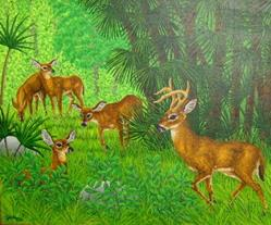 Art: Florida Key Deer by Artist Jackie K. Hixon