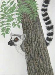 Art: Eager Lemur (SOLD) by Artist Jackie K. Hixon