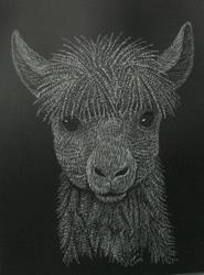 Art: Alpaca Mug Shot by Artist Jackie K. Hixon