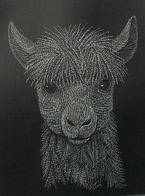 Art: Alpaca Mug Shot (SOLD) by Artist Jackie K. Hixon