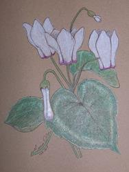 Art: Cyclamen by Artist Marcine (Marcy) Dillon