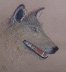 Art: Wolf... by Artist Marcine (Marcy) Dillon