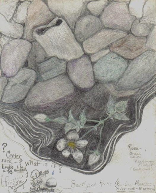 Art: Journal page - Backyard rocks & roses by Artist Marcine (Marcy) Dillon