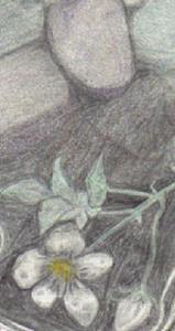 Detail Image for art Journal page - Backyard rocks & roses