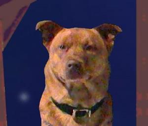 Detail Image for art Man's Best Friend