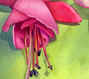 Detail Image for art Fuchsia from my Patio