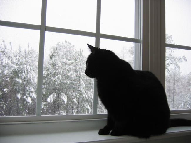 Art: Watching Snowflakes by Artist Cassandra Renee Truan