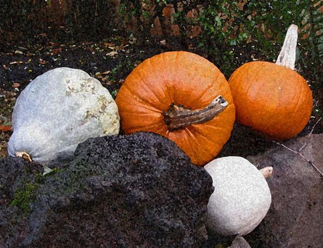 Art: Pumpkin Family by Artist Carissa M Martos