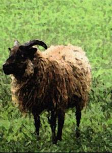 Detail Image for art Sheep?