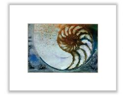 Art: Nautilus Shell 68 by Artist Kathy Morton Stanion