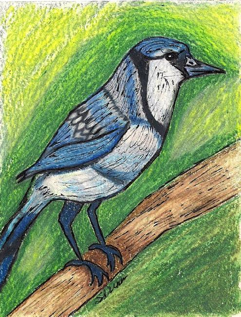 Art: Blue Jay by Artist Shari Lynn Schmidt