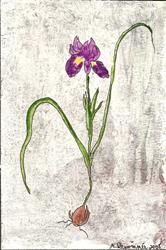 Art: Iris Sisyrinchium original OSWOA painting by Artist Nancy Denommee