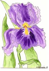 Art: Glorious Iris original OSWOA painting by Artist Nancy Denommee