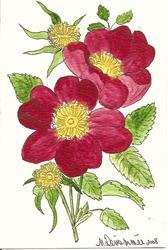 Art: Wild Rose original OSWOA painting by Artist Nancy Denommee