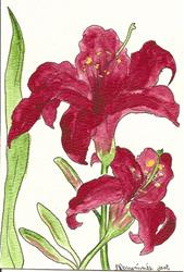 Art: Burgandy Day Lily original OSWOA painting by Artist Nancy Denommee