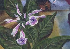 Detail Image for art Lady nicotiana