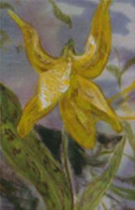Detail Image for art Dog Tooth Violet