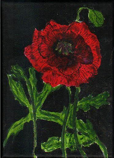 Art: Poppy on Black  by Artist Nancy Denommee