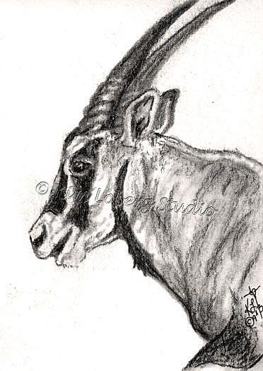 Art: Charcoal Oryx by Artist Kim Loberg