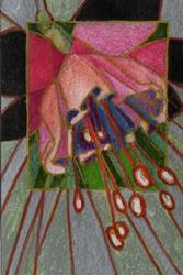 Art: Fuschia/Fuchsia by Artist Judith A Brody