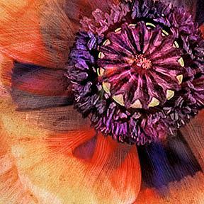 Detail Image for art Stately Poppy
