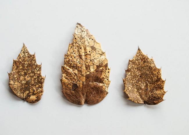 Art: Golden Crests by Artist Gabriele Maurus