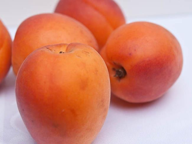 Art: Apricot models 12 by Artist Gabriele Maurus