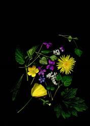 Art: Meadow Mix by Artist Gabriele M.