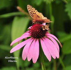 Art: The Butterfly and the bee by Artist Stephanie M. Daigle
