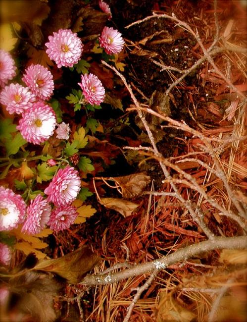 Art: Autumnal Decay - Harmonium by Artist Shawn Marie Hardy