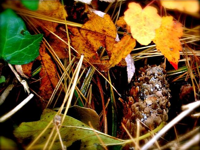 Art: Autumnal Decay - Cone of Silence by Artist Shawn Marie Hardy