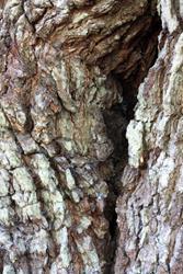 Art: Angel Oak Crack by Artist Tina Marie Ferguson