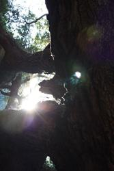 Art: Angel Oak Light by Artist Tina Marie Ferguson