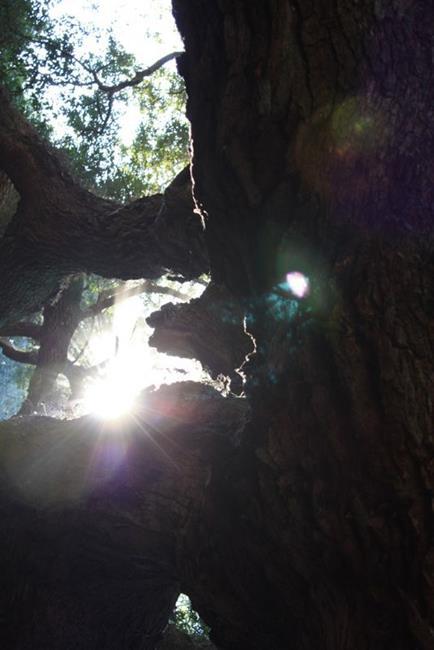 Art: Angel Oak Light by Artist Tina Marie Ferguson