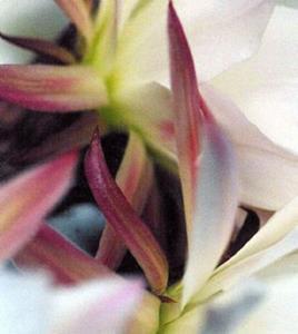 Detail Image for art Cactus Flower