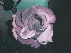 Art: Pink Rose by Artist Sherry Key