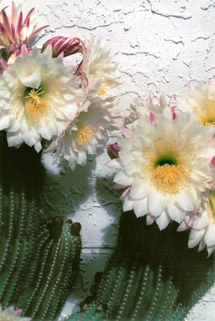 Art: Backyard Cactus by Artist Shawn Marie Hardy