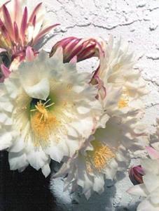 Detail Image for art Backyard Cactus