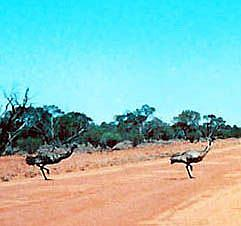 Detail Image for art Emu Crossing