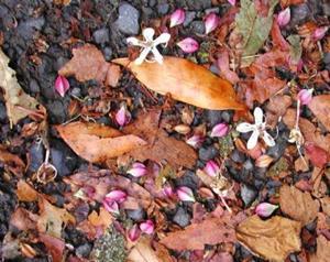 Detail Image for art Autumn Gutter