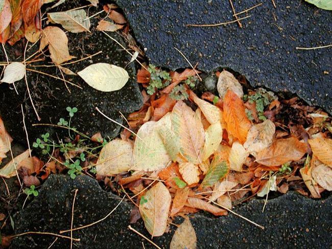 Art: Autumn Gutter 2 by Artist Shawn Marie Hardy